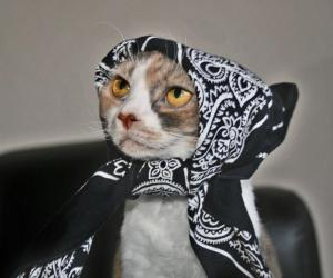 catbabushka_1