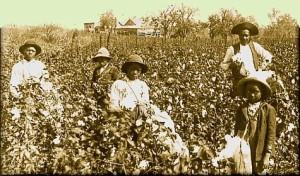 CottonPlantation