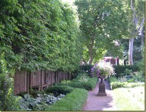 neighborsplants