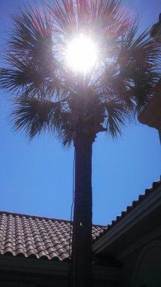 palmsun
