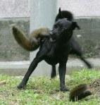 squirrel19