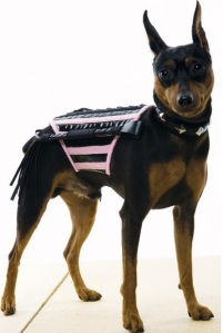 dominatrix-dog