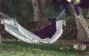 bear77
