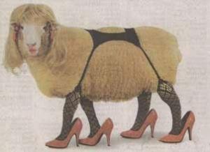 sheep122