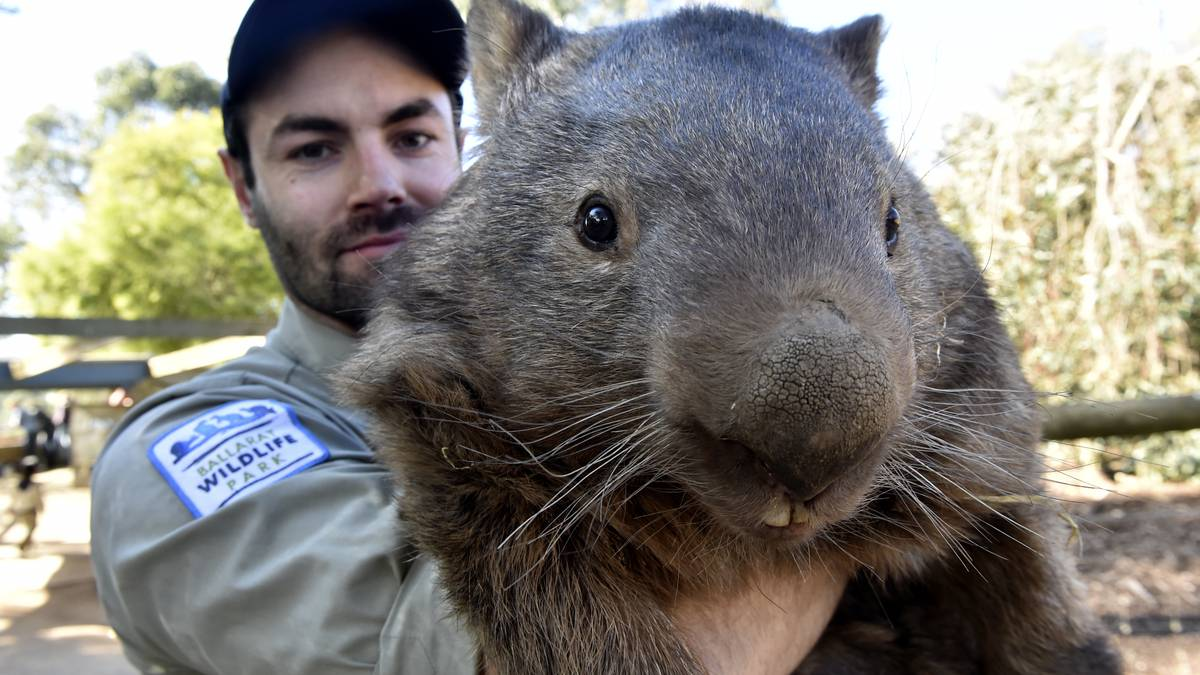 Wombat The Cretonia Times Picayune