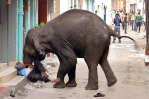 elephant24