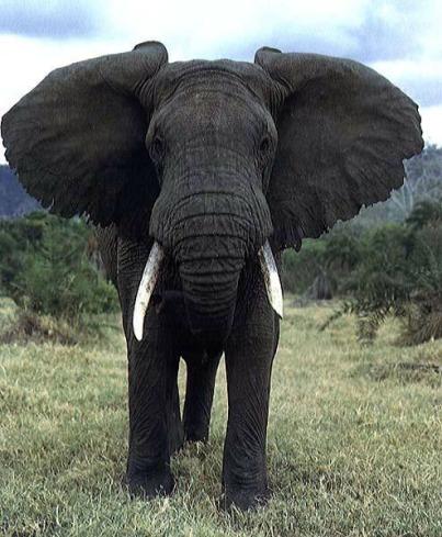 elephant244