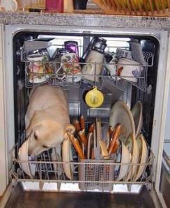 dogdishwasher