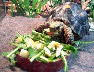 turtle-5