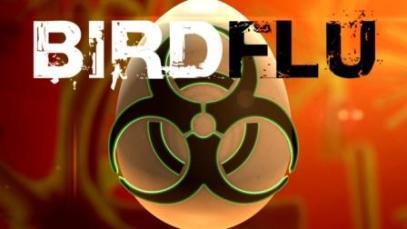 Bird+Flu6