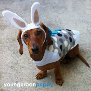 easter-bunny-costume-for-dogs-3