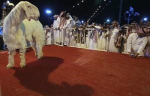 goat-beauty_1054288i