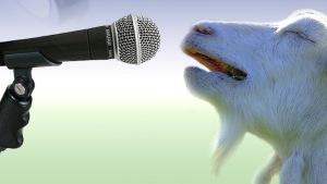 goat-singing