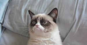 grumpycat3