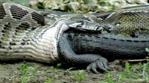 python5