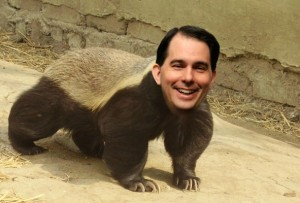 Scott-Walker-Honey-badger-591x400