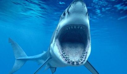 great-white-shark-Mediterranean-italy-attacks-03