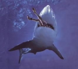 shark-attack1